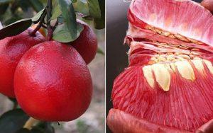 Một số loại hoa quả siêu độc lạ