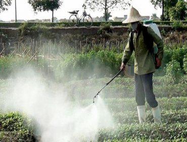 Hiểm họa thực phẩm bị tồn dư thuốc bảo vệ thực vật