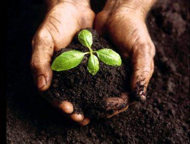Tìm hiểu về dinh dưỡng trong đất và phân bón